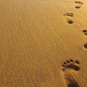 """Aprendiendo a """"estar en el ahora"""": primeros pasos (Mindfulness I)"""